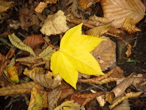 В Кременчуге не успевают вывозить опавшие листья