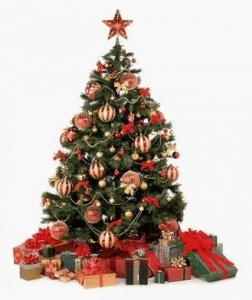 С этой субботы в Кременчуге начинается продажа живых новогодних елок
