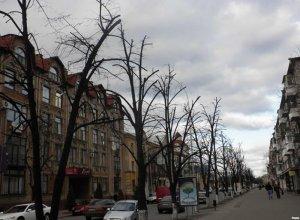 Переживут ли деревья обрезание крон?