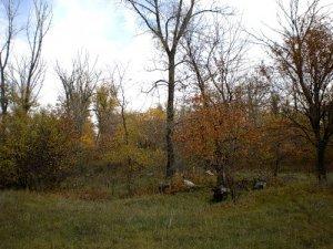 На Полтавщине 19-летний парень забил до смерти мужчину и оставил его в лесополосе