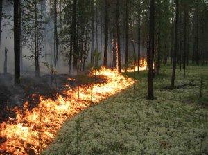На Полтавщине возникла чрезвычайная пожарная опасность