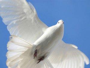 Межрегиональная выставка голубей в Кременчуге