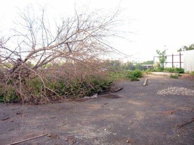 Упавшие деревья в Кременчуге убрали к празднику