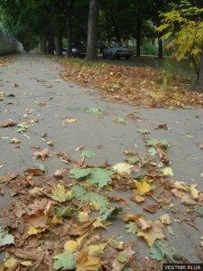 Из Кременчуга листья будут вывозить до 10 декабря