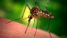 В Кременчуге поговорили о малярии
