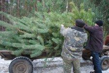 В Кременчуге елки будут продавать в специальных местах