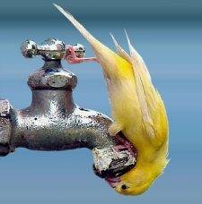 В результате аварии часть кременчужан осталась без холодной воды