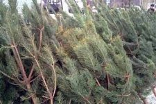 В Кременчуге елки без чипов запрещены