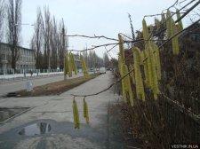 В Кременчуге уже распустились деревья