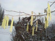 В Кременчуге потеплеет с 18 марта