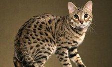 В Кременчуге покажут «синего леопарда»
