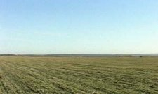 Сколько и чего уже посеяно на полях Полтавщины?