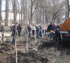 Посаженные в этом году деревья нужно поливать