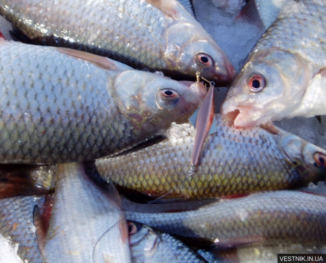 форум рыбаков старобельска