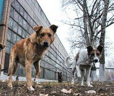 В Кременчуге на ул.Ватутина подростка покусала собака