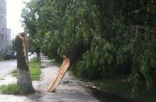 Вчера в Кременчуге упало два дерева
