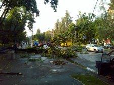 В Кременчуге 86 деревьев представляют угрозу для троллейбусных линий