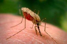 В Кременчуге зафиксировали случай заболевания тропической малярией