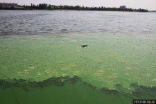 Кременчугская СЭС вынесла запрет на купание в Днепре