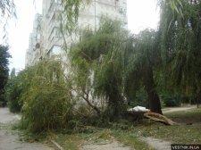 В Кременчуге ураган повалил 17 деревьев