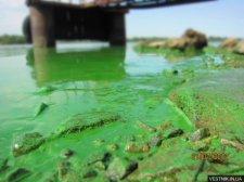 В Днепре возле Кременчуга начался замор рыбы