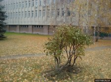 В Кременчуге уже начали бороться с листопадом