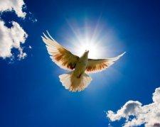В Кременчуге отметят Всемирный день мира