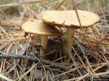 В Кременчуге еще у одного мужчины подозревают отравление грибами
