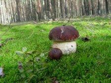 """Кременчужане продолжают """"шутить"""" с грибами"""