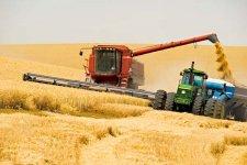 Поздние зерновые на Полтавщине собрали на 60% площадей