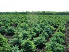 На Полтавщине в 2013 году высадят новые леса