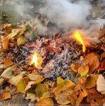В Кременчуге ведется работа относительно недопущения сжигания опавших листьев