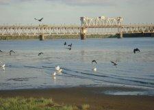 В Кременчуге установят границы защитной прибрежной зоны