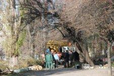 КП «Благоустрій Кременчука» сносит аварийные деревья