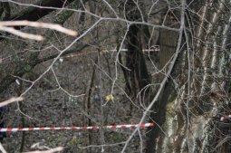 Младенец, брошенный в лесополосе под Кременчугом, умер от холода
