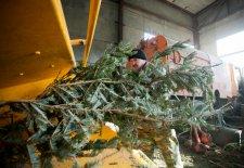 После завершения новогодних праздников кременчужан просят складывать елки вблизи контейнерных площадок