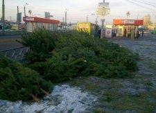 24 тысячи елок кременчужане выбросили на свалку