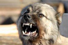 В Кременчуге на женщину-почтальона напали собаки