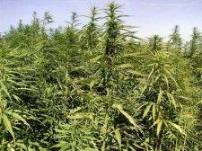 В Кременчуге изъято большое количество опасного наркотика
