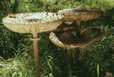 У 22 кременчужан врачи подозревали отравление грибами