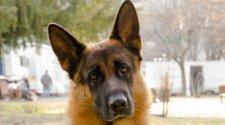 На кременчугском вокзале собака нашла наркотики