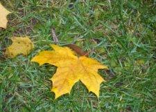 Наслаждаться теплом осталось недолго: в середине ноября похолодает